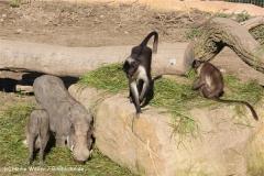 Zoo Osnabrueck 101010- IMG_2242