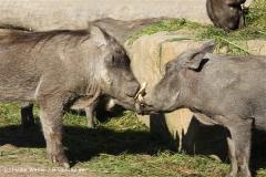 Zoo Osnabrueck 101010- IMG_2249