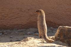 Zoo Osnabrueck 101010- IMG_2283
