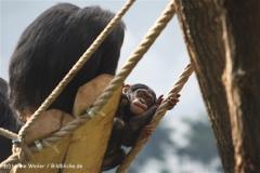 Zoo Osnabrueck 101010- IMG_2352