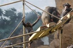 Zoo Osnabrueck 101010- IMG_2375-2