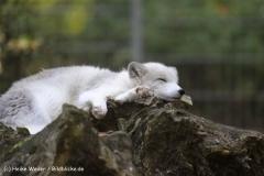 Zoo Osnabrueck 101010- IMG_2430