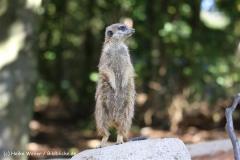 Zoo Osnabrueck 101010- IMG_2495-2