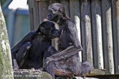 Zoo_Osnabrueck_230712_IMG_7891