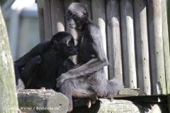 Zoo_Osnabrueck_230712_IMG_7893