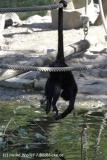 Zoo_Osnabrueck_230712_IMG_7902