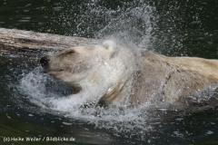 Zoo_Osnabrueck_230712_IMG_7950