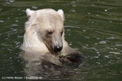 Zoo_Osnabrueck_230712_IMG_7958