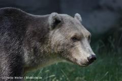 Zoo_Osnabrueck_230712_IMG_7965