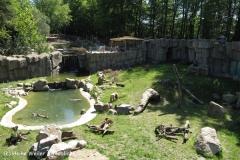 Zoo_Osnabrueck_230712_IMG_8006_1_6201