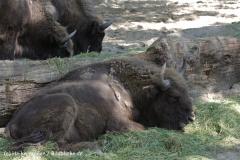 Zoo_Osnabrueck_230712_IMG_8015
