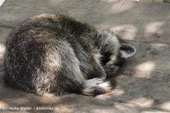Zoo_Osnabrueck_230712_IMG_8018