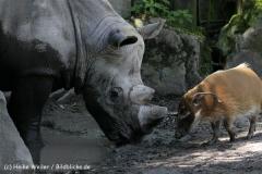 Zoo_Osnabrueck_230712_IMG_8027