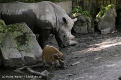 Zoo_Osnabrueck_230712_IMG_8029