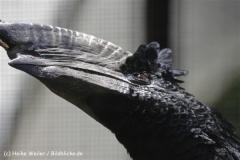 Zoo_Osnabrueck_230712_IMG_8076