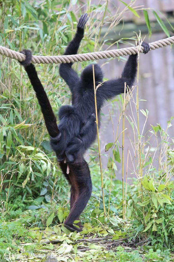 Zoo_Osnabrueck_241015_IMG_0134