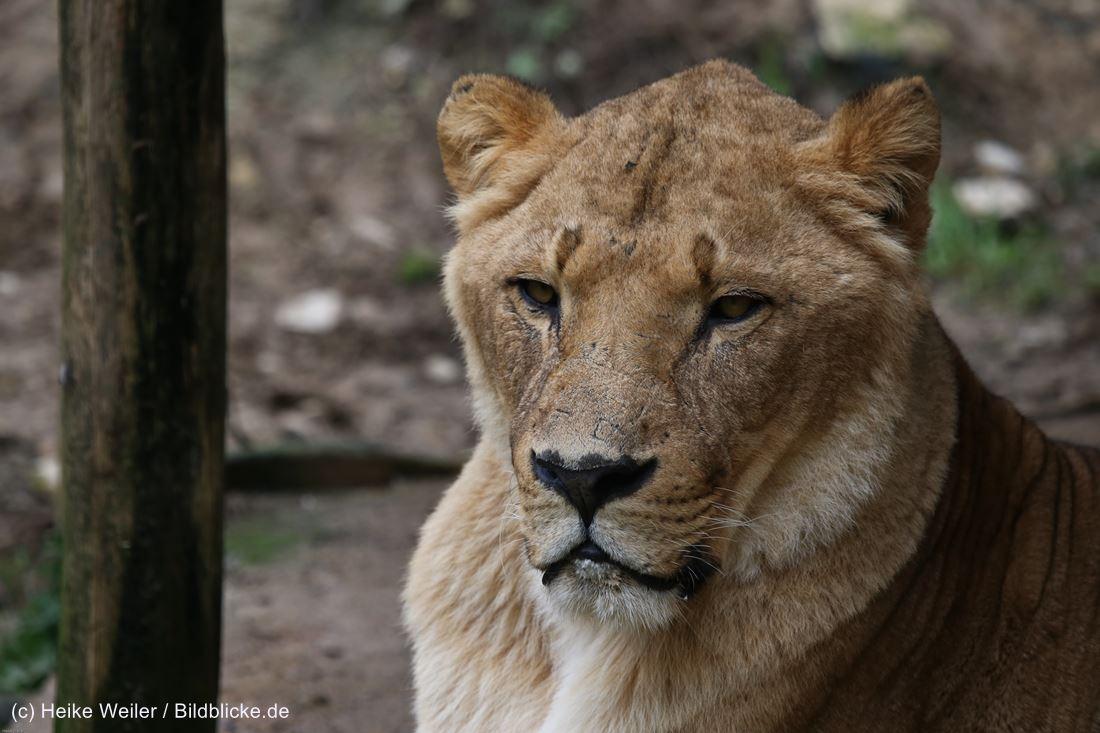 Zoo_Osnabrueck_241015_IMG_0166