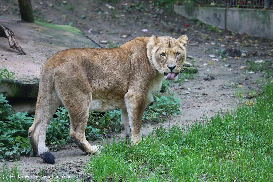 Zoo_Osnabrueck_241015_IMG_0180