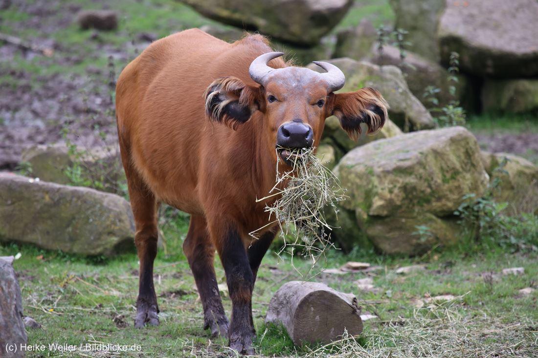 Zoo_Osnabrueck_241015_IMG_0283