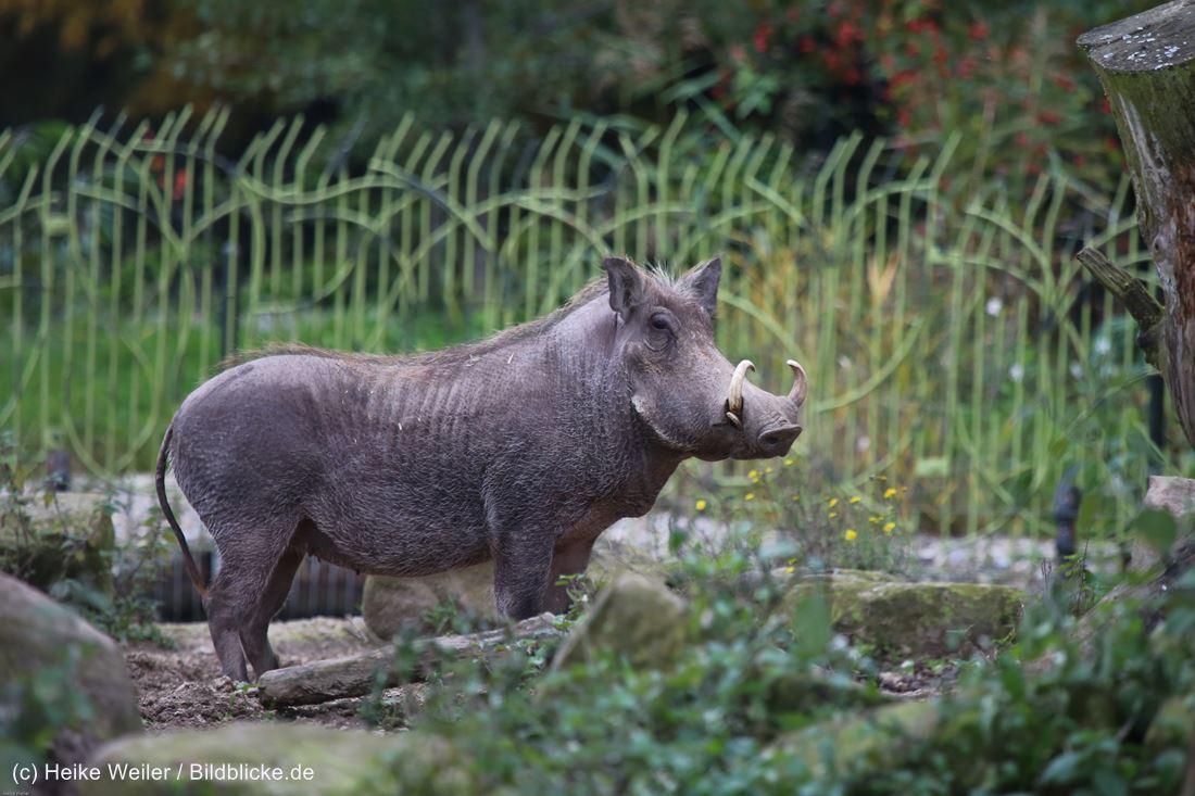 Zoo_Osnabrueck_241015_IMG_0298
