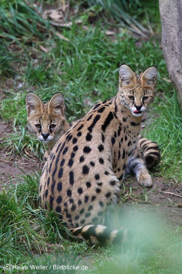 Zoo_Osnabrueck_241015_IMG_0326