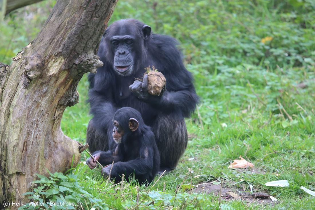 Zoo_Osnabrueck_241015_IMG_0361