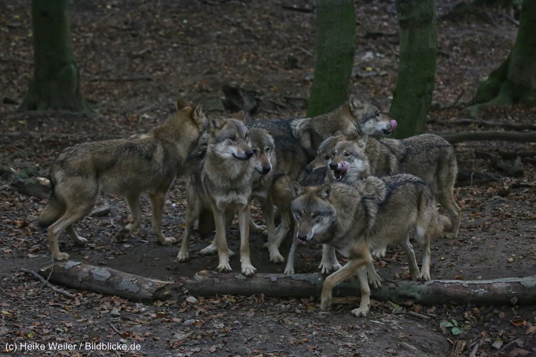 Zoo_Osnabrueck_241015_IMG_0414