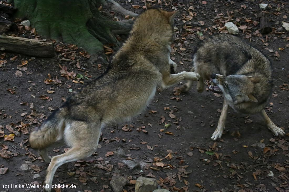 Zoo_Osnabrueck_241015_IMG_0432