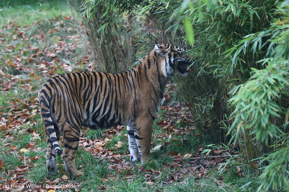Zoo_Osnabrueck_241015_IMG_0531