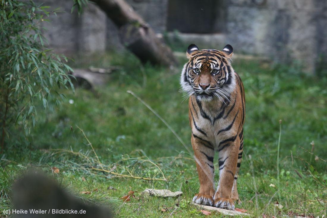 Zoo_Osnabrueck_241015_IMG_0539