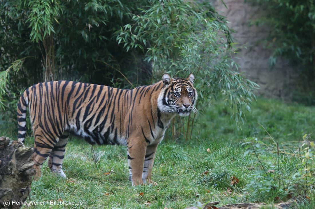Zoo_Osnabrueck_241015_IMG_0548