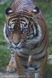 Zoo_Osnabrueck_241015_IMG_0525