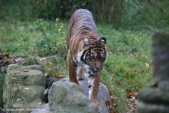 Zoo_Osnabrueck_241015_IMG_0543