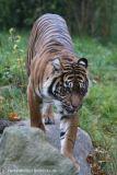 Zoo_Osnabrueck_241015_IMG_0543_2