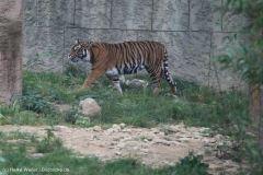 Zoo_Osnabrueck_241015_IMG_0550