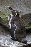 Zoo_Osnabrueck_241015_IMG_0590