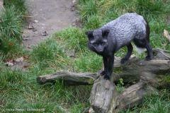 Zoo_Osnabrueck_241015_IMG_0622