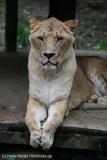 Zoo_Osnabrueck_241015_IMG_0208