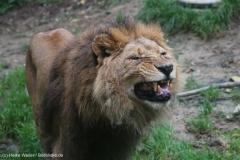 Zoo_Osnabrueck_241015_IMG_0229