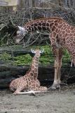 Zoo_Osnabrueck_241015_IMG_0259
