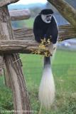 Zoo_Osnabrueck_241015_IMG_0311