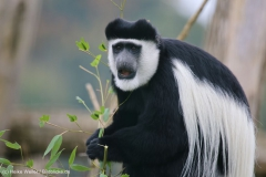 Zoo_Osnabrueck_241015_IMG_0322