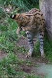 Zoo_Osnabrueck_241015_IMG_0347