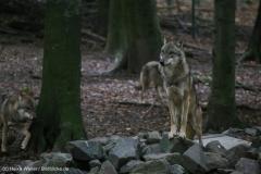Zoo_Osnabrueck_241015_IMG_0407