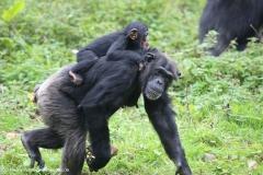 Zoo_Osnabrueck_241015_IMG_0376