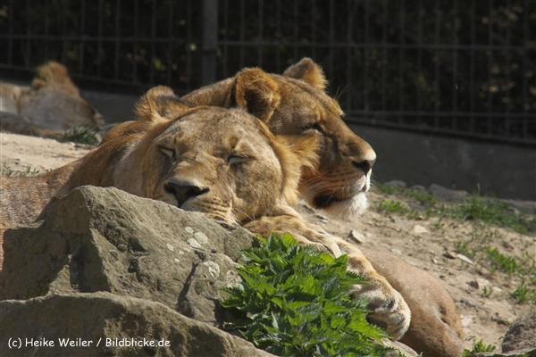 Zoo-Osnabrueck-250410-IMG_0602