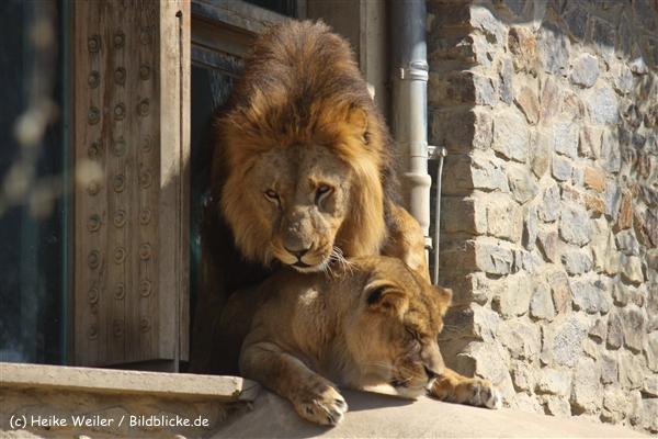 Zoo-Osnabrueck-250410-IMG_0617