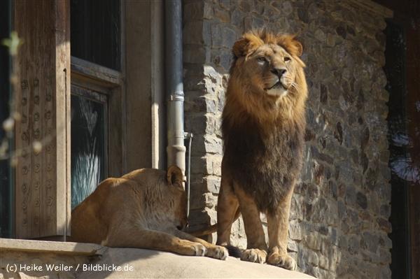 Zoo-Osnabrueck-250410-IMG_0621