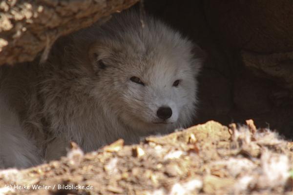 Zoo-Osnabrueck-250410-IMG_0682