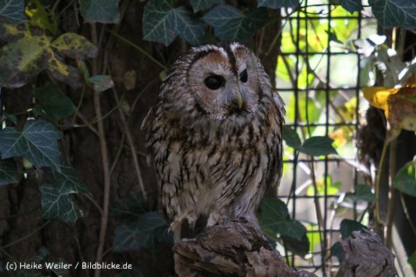Zoo-Osnabrueck-250410-IMG_0701